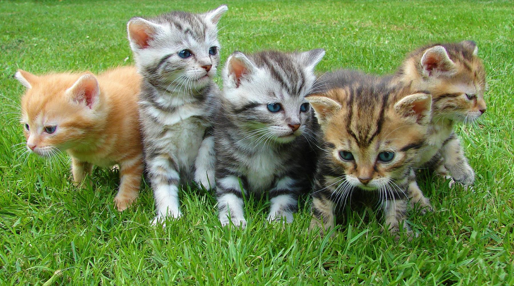 Herding Cats?
